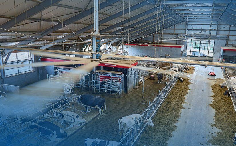 """""""De koeien willen zo dicht mogelijk aan het voerhek staan, onder de ventilatoren. Ze blijven vreten! """""""