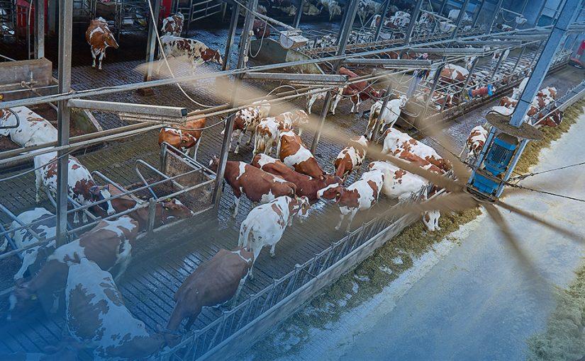 """""""Een bijkomend voordeel is dat de kraaien tijdens het draaien wegblijven uit de stal."""""""